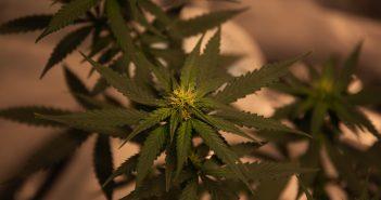 De do's-and-don'ts inzake cannabisgebruik op het werk