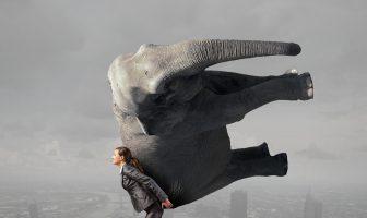 Lifting elephant struggle